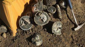 Thám hiểm Nam Cực, phát hiện 1 tấn hóa thạch khủng long
