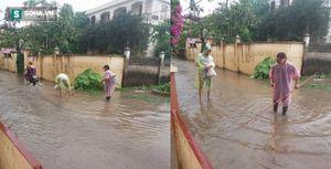 Hà Nội: Sau trận mưa lớn, người dân ra đường bắt cá