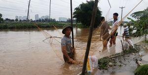 Đổ xô bắt cá sau ngập nặng ở Hà Nội, nhiều người kiếm tiền triệu