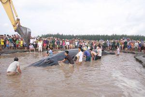 Nghệ An: Đang theo dõi sát sức khỏe cá voi 'khủng' cách bờ 16 hải lý