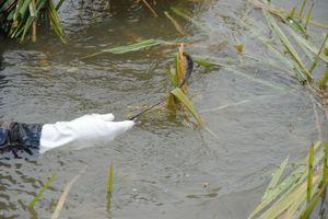 Vĩnh Phúc: Người dân gặt lúa 'chạy lũ' giữa biển nước mênh mông