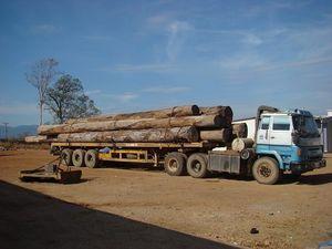 Tự do thương mại và tác động đến hiệu quả quản trị rừng