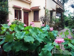 Ngẩn ngơ ngắm ngôi nhà phố Hà Nội ngập tràn sắc sen