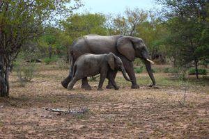 Sự thật bất ngờ về động vật hoang dã khi còn bé