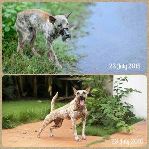 Sau 1 năm, chú chó bị hoại tử mõm tại Bến Tre đã hồi phục thế này đây!