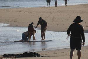 Cá sấu ngoạm đứt chân du khách ở bãi biển Costa Rica