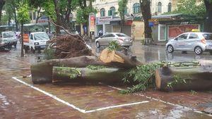 Chủ động ứng phó mưa lớn sau bão
