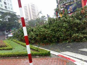 Những tuyến đường đang có cây đổ ở Hà Nội (cập nhật...)