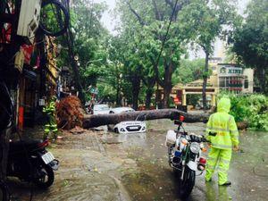 Bão lớn gây nhiều tai nạn cho xe máy, nhiều ôtô bị đè bẹp
