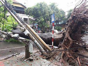 EVN cảnh báo nguy hiểm do bão số 1 gây tổn hại lưới điện
