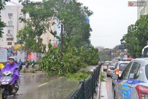Hà Nội: Bất chấp nguy hiểm, gió to, người dân lao vào cứu 2 phụ nữ bị cây đè do bão
