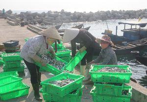 Chưa thể công bố hải sản miền Trung an toàn
