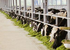 Thương hiệu sữa Việt 40 năm với kỳ tích xuất khẩu đi 43 nước