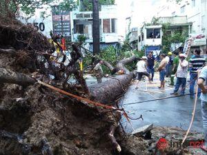 Mưa gió quật ngã cây cổ thụ đổ trúng 1 người và 5 xe máy,1 ô tô