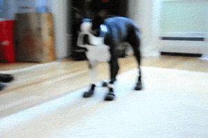 20 khoảnh khắc cực ngố nhưng siêu yêu của những con thú cưng