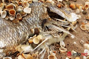 3900 tấn hải sản tồn kho sau sự cố Formosa: Ăn hay bỏ?