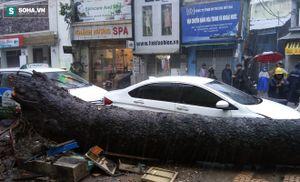 Cây cổ thụ cao 15m bất ngờ đổ ở Sài Gòn, một người bị thương