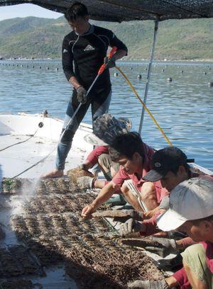 Lặn ngụp nuôi bắt trai lấy ngọc dưới biển