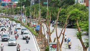 Chủ tịch Hà Nội lý giải việc dừng cắt cỏ nhiều tuyến đường