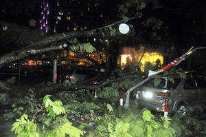 Cây xanh bật gốc giữa trung tâm Sài Gòn đè 7 ô tô