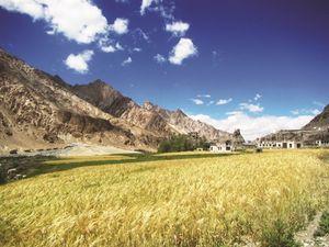 Trekking ở Kashmir: Cuộc chinh phục độ cao 5.000m