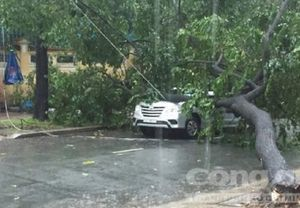 Sài Gòn mưa lớn, cây xanh bị quật ngã đè bẹp ô tô 7 chỗ