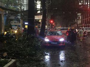 Ngập lại tiếp diễn ở Sài Gòn, cây ngã đè ô tô