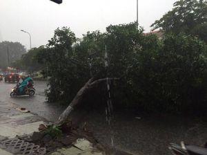 TP.HCM lại mưa to, người dân lo ngập
