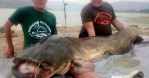 Kinh ngạc cá trê khổng lồ 90kg, dài hơn 2m ở Tây Ban Nha