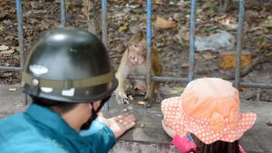 Nóng 24h: Đưa đàn khỉ cắn người trong Tòa thánh Tây Ninh về vườn quốc gia
