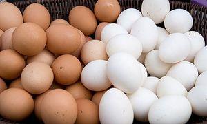 Sự khác nhau ít biết giữa trứng gà màu trắng và nâu