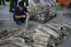 Bắt giữ 1 tấn ngà voi nhập lậu hàng chục tỷ đồng tại TP. HCM