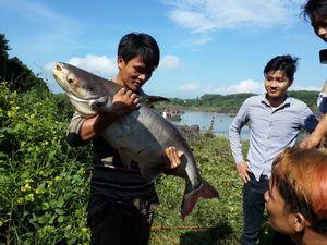 Cả trăm người lùng bắt cá khủng dưới chân đập thủy điện Trị An