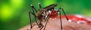 Những câu hỏi thường gặp về virus Zika gây bệnh đầu nhỏ ở trẻ
