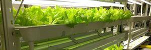 FPT đầu tư công nghệ cao để nâng cao năng suất chất lượng nông nghiệp