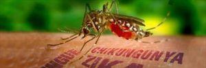 Phòng tránh virus Zika bằng cách tránh hôn và kiêng sex