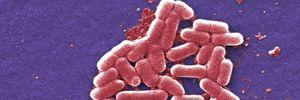 Mỹ phát hiện 'siêu vi khuẩn' kháng mọi loại kháng sinh điều trị