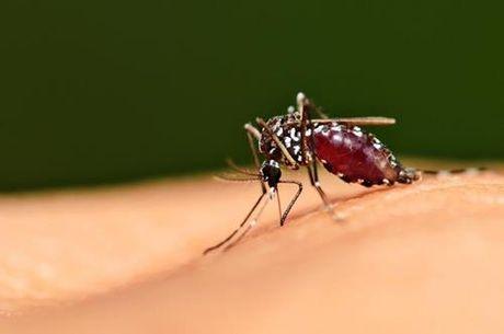 Sẽ ra sao nếu toàn bộ côn trùng trên Trái đất biến mất