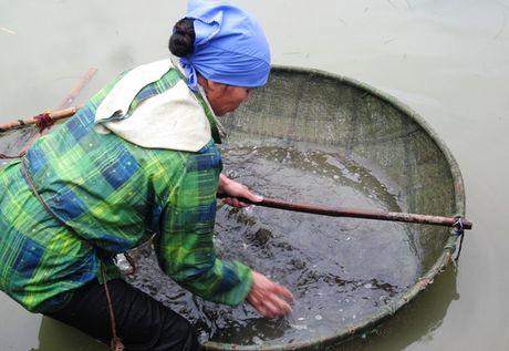 Hình ảnh độc, lạ về mắm tép riu tiến vua xứ Thanh