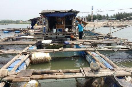 Thanh Hoa: Xac dinh nguyen nhan ca long chet tren song Tinh Gia - Anh 1