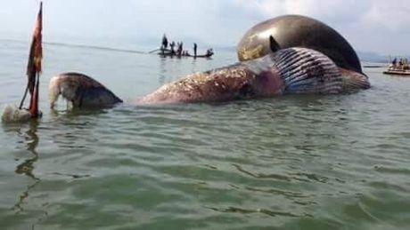 Đổ xô xem cá voi 7 tấn chết dạt biển Nghệ An