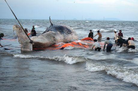 Toàn cảnh trục vớt cá voi 'khủng' tại Nghệ An