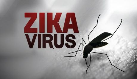 My thu thanh cong vacxin phong chong virus Zika tren dong vat - Anh 1