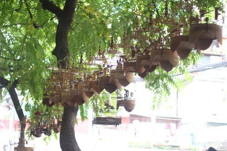 5 151075 Tìm hiểu về kỹ năng và nghệ thuật chăm chim của Vua chim màu đất Bắc