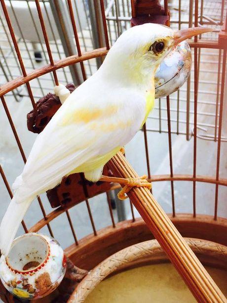 7 198890 Tìm hiểu về kỹ năng và nghệ thuật chăm chim của Vua chim màu đất Bắc