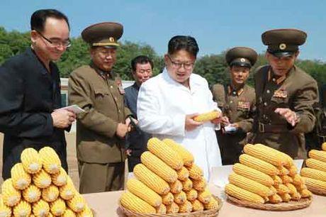 Kim Jong-un khac cha, giong ong noi the nao - Anh 5