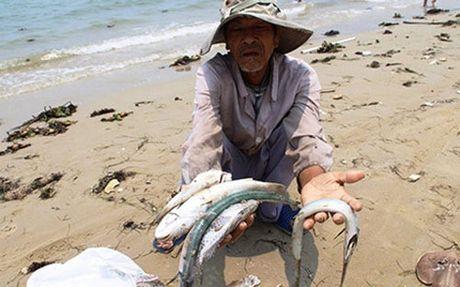 Trinh Thu tuong ke hoach boi thuong hau Formosa tuan toi - Anh 1