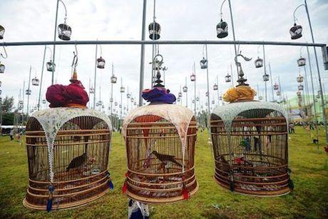 1.000 loai chim cung tham du cuoc thi chim thuong nien - Anh 2
