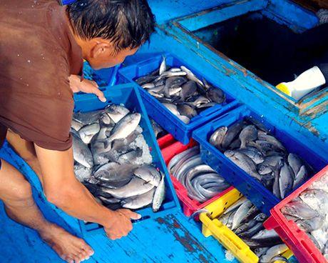 Ha Tinh pho bien 154 loai hai san chua an toan cho ngu dan - Anh 1