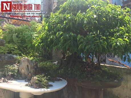 Gap nguoi thoi hon dieu khac da vao nghe thuat bonsai tai Da Nang - Anh 12